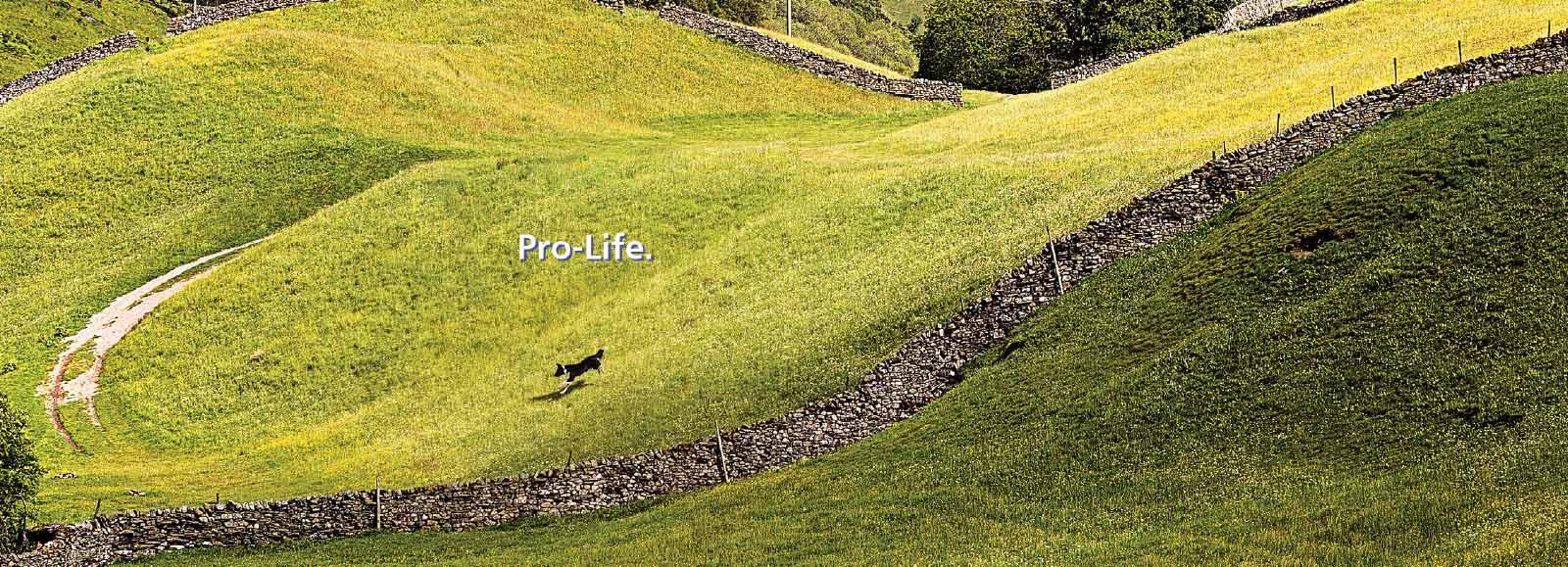 Pro-Life banner